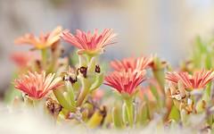 I'm back! (GloriaGarca) Tags: pink flower green nature spring nikon nikkor50mmf18