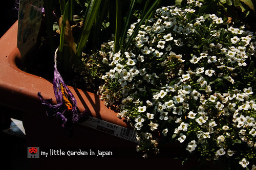 my-new-little-garden-in-japan1