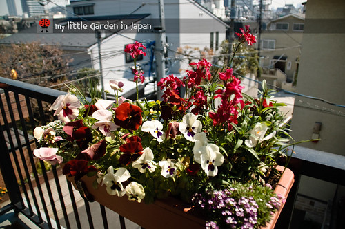 my-new-little-garden-in-japan7