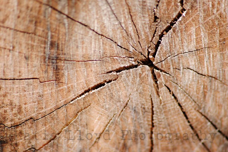 Tree Texture 1