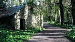 Tintern Abbey Woods (Ken Meegan) Tags: wood trees ireland tinternabbey cowexford saltmills tinternabbeywoods 1042011