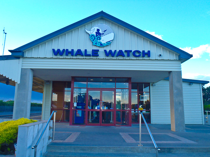 Whale-watch-kaikoura-new-zealand
