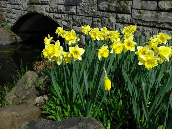 queen elizabeth park yellow 008