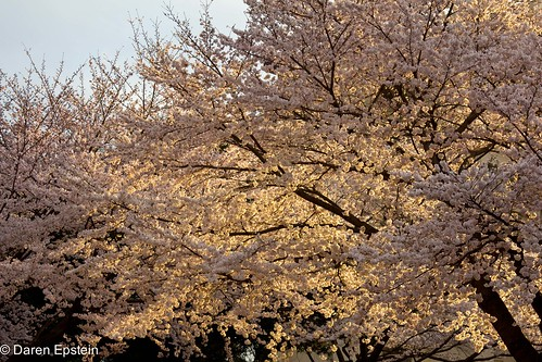 Sakura and Light 2