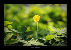 Leave me alone! [explored] (e.nhan) Tags: flowers light flower art nature leaves yellow closeup landscape colorful colours dof bokeh arts backlighting enhan