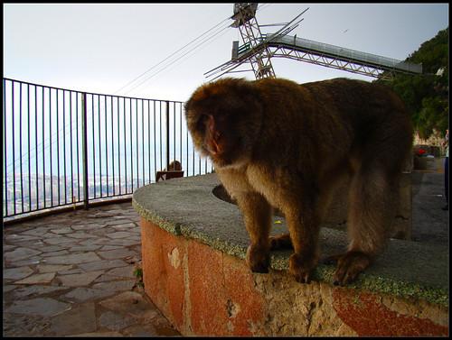 Mirador de los Monos (2)