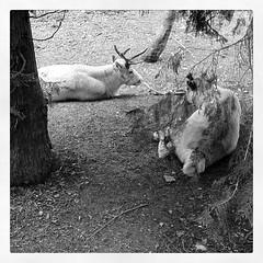 Reindeer!!