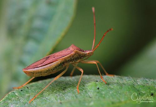 Micro Cricket