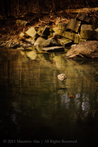 Ravine Zen by The Torontonian