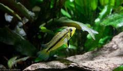 Aquarium 04_2011-4