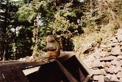 ((T')art) Tags: voyage travel india color animal monkey asia minolta daytime asie himatic dharamsala inde fujisuperia400 himatic7s tlmtrique telemetric