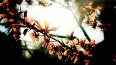 (chattaboxcarley) Tags: trees light sun green nature beautiful grass leaves contrast outside outdoors cg enhance sunflare