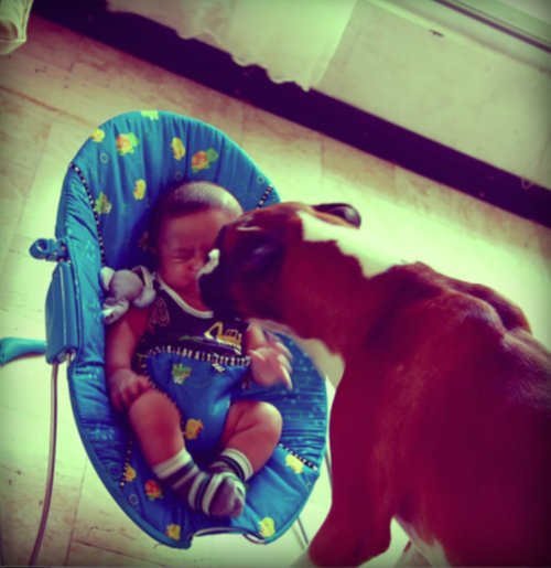 baby and a boxer