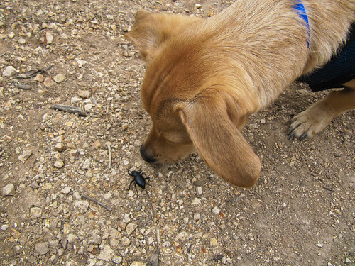 Baxter meet beetle