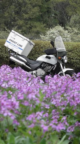 バイク便 所沢市 春