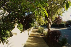 GOPR0081 (Schuyler Van Loon) Tags: california street trees santacruz tree sunny fisheye seabright gopro oceanveiw