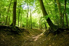 Chilterns , Turville (Lonfunguy) Tags: uk trees light england green forest chilterns oxfordshire turville