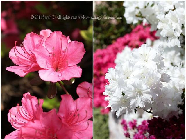 Collage fiori 3edited