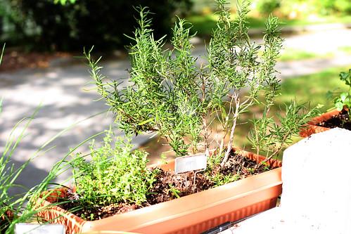 herbgarden1