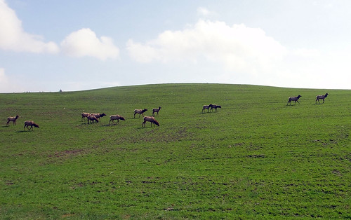 A herd of elk, part of the largest wild elk herd in the Northeastern United States, can continue to graze in their natural habitat due in part to to a new Rural Development funded wastewater treatment system that will clean up two watersheds.