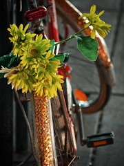Petal Power (jaxxon) Tags: flowers flower macro bike bicycle lens prime nikon pad petal fender micro fixed 28 365 mm nikkor rim f28 vr pedal afs 105mm 105mmf28 2011 d90 nikor project365 f28g gvr jaxxon jackcarson multifarious apicaday 105mmf28gvrmicro ayearinpictures nikond90 118365 hpad project365118 nikkor105mmf28gvrmicro 365118 desklickr nikon105mmf28gvrmicro jacksoncarson jacksondcarson ayearinphotographs hpadw project3652011 2011yip 3652011 yip2011 2011ayearinpictures 2011365118 project3651182011
