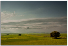 (Antonio Carrillo (Ancalop)) Tags: sky espaa cloud tree verde green field canon arbol spain europa europe andalucia cielo granada nubes campo lopez antonio tamron almeria carrillo 50d 1750mm ancalop