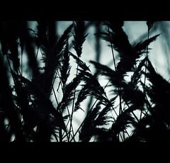 Escondida (__Blanca__) Tags: palencia tierradecampos lagunadelanava fuentesdenava