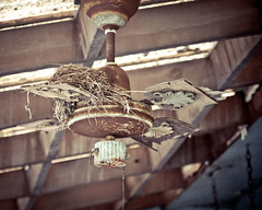 Nesting Instinct (sadandbeautiful (Sarah)) Tags: abandoned fan nest pennsylvania farm porch bethlehem ceilingfan