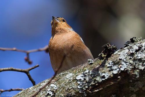 Crop of Bird