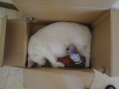 Cataholic Cat drunk again (Fintona) Tags: beer animal drunk cat wine drink drinking hangover stoned merry asleep distillery lager dozing inebriated woozy cataholic