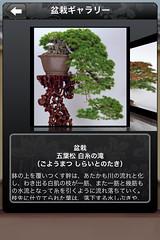 つい、盆栽 盆栽ギャラリー