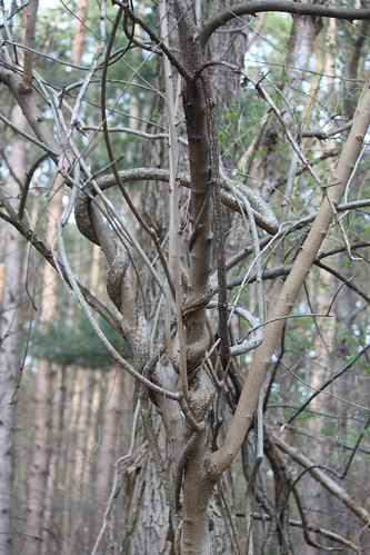 Interesting Shapes of Branches and Vines