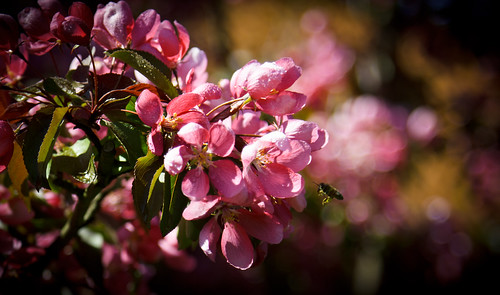 Bee'N'flower