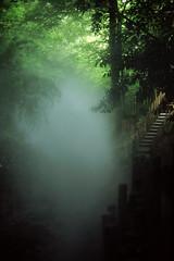 Brume sans gorilles (philoufr) Tags: mist castle stairs forest garden chteau nikonfe fort brume escaliers nikkor50mmf14d fujiprovia100f chaumontsurloire festivaldesjardins epsonperfectionv500photo