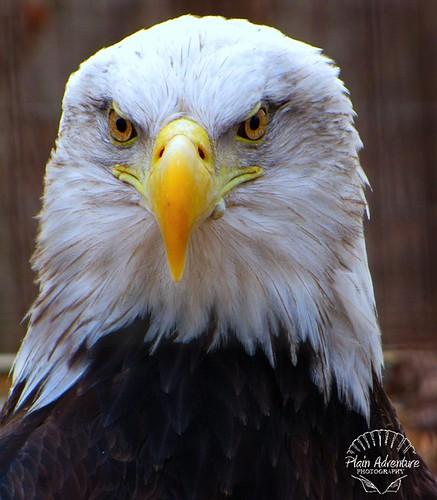 eagle 3 watermark