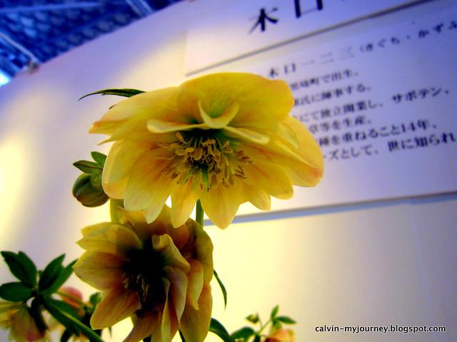 IMG_5289-1