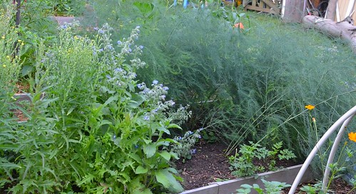 Angel: Garden Update June 2011
