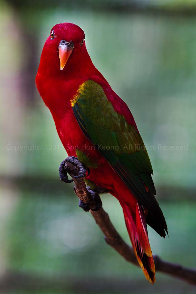 I Stare @ KL, BirdPark, Malaysia