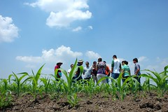 Learning among the maize (CIMMYT) Tags: people plant planta field mxico mexico student corn experimental gente group headquarters visit mexican learning campo grupo teaching agriculture visitor maize mexicano plot sede visita researchcenter estudiante agricultura parcela aprendiendo researchstation visitante maz elbatn enseanaza experimentstation cimmyt centrodeinvestigaciones estacinexperimental estacindeinvestigacin