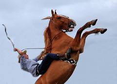 Com entono de ginete... (Eduardo Amorim) Tags: brazil horses horse southamerica brasil caballo cheval caballos cavalos pelotas pferde cavalli cavallo cavalo gauchos pferd pampa hest hevon