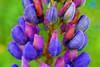 FEERIQUE PRINTEMPS ! (Gilles Poyet photographies) Tags: fleurs printemps soe auvergne puydedôme autofocus royat aplusphoto parcbargoin artofimages rememberthatmomentlevel4 rememberthatmomentlevel1 rememberthatmomentlevel2 rememberthatmomentlevel3