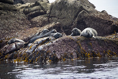 Seals (toschi) Tags: islesofscilly england cornwall uk stagnes
