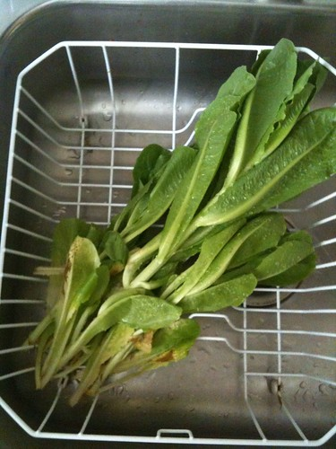 Lettuce from the garden!