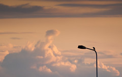Lost in Thought (sammydingle) Tags: sky bird clouds canon lamppost lone magpie tamron
