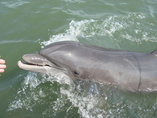 The Dolphin On Little Tybee Creek - 2