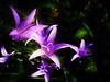 ... (Ariassa) Tags: flowers flores macro efectoorton
