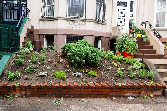 nikon - garden, week three-0559