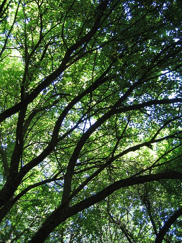 Branches overhead