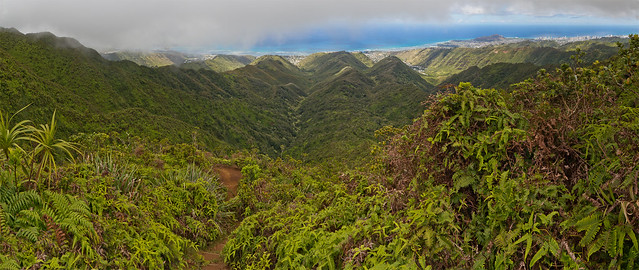 Hawaii.Loa.Ridge.01