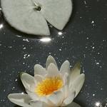 "DSC_9641 <a style=""margin-left:10px; font-size:0.8em;"" href=""http://www.flickr.com/photos/76178133@N08/7093880379/"" target=""_blank"">@flickr</a>"